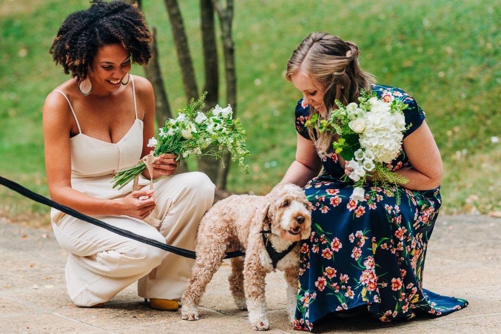 pets at weddings, dog ring bearer